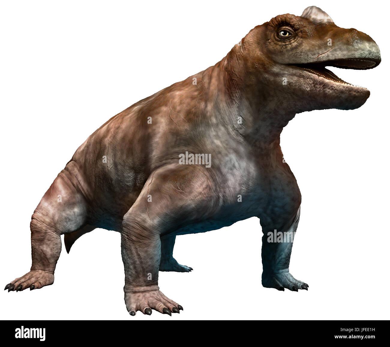 keratocephalus Stock Photo