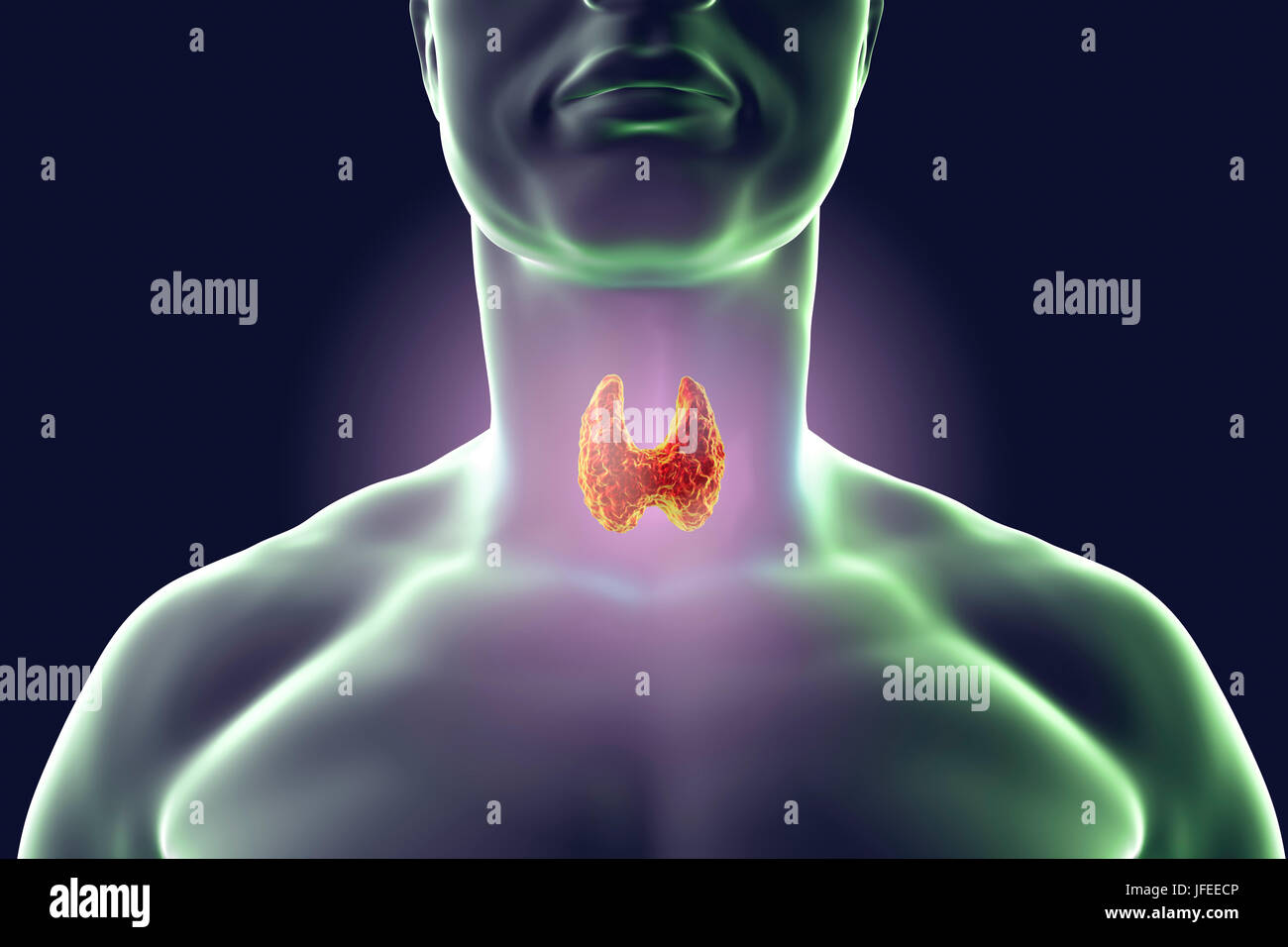 Thyroid gland in a man's neck, computer illustration. - Stock Image
