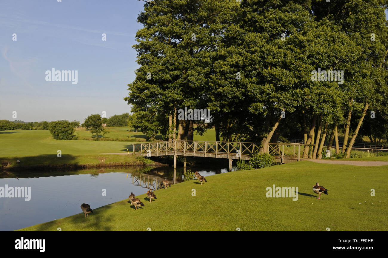 View of the Pond and Ducks on the 9th Hole, Windlesham Golf Club, Bagshot, Surrey, England - Stock Image