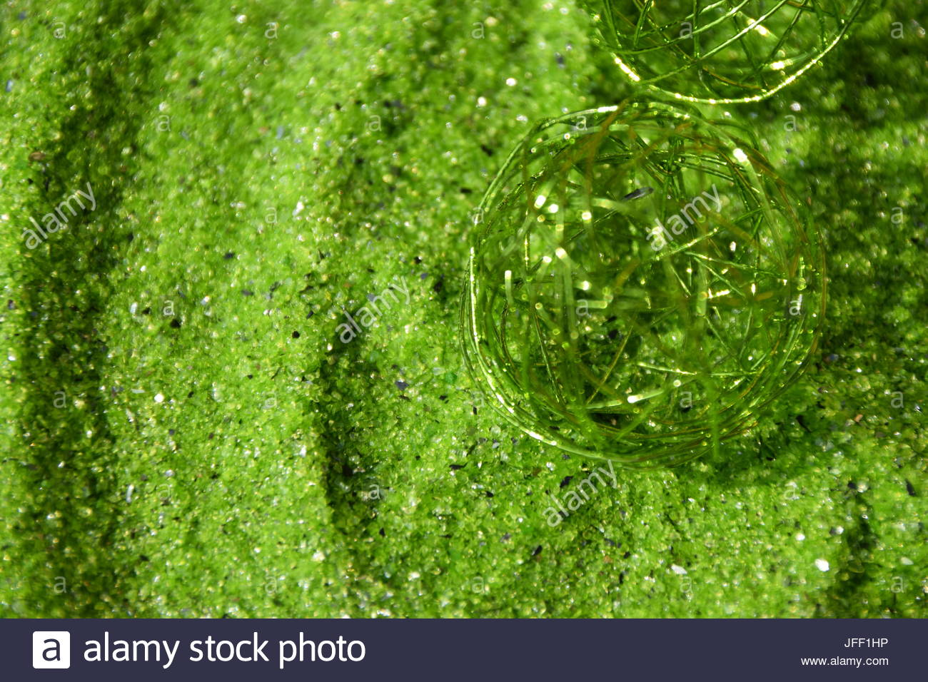 Green sand and green metal - Stock Image