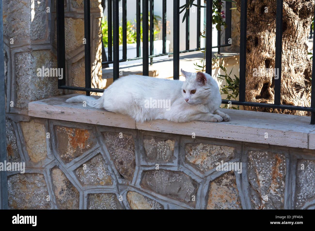 Weiße Katze liegt auf einer Mauer Stock Photo