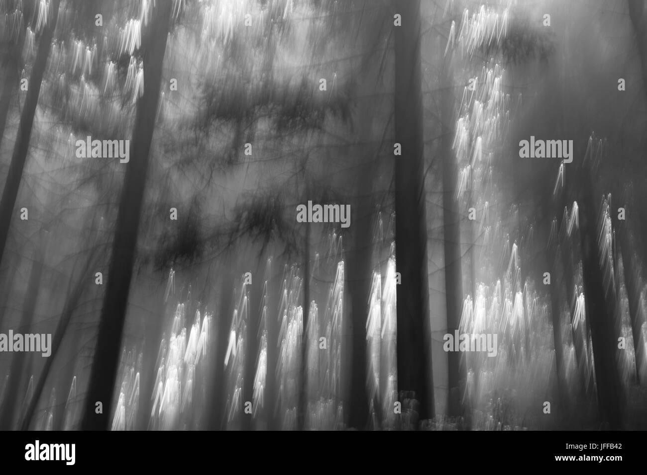 forest of a fary tail Stock Photo