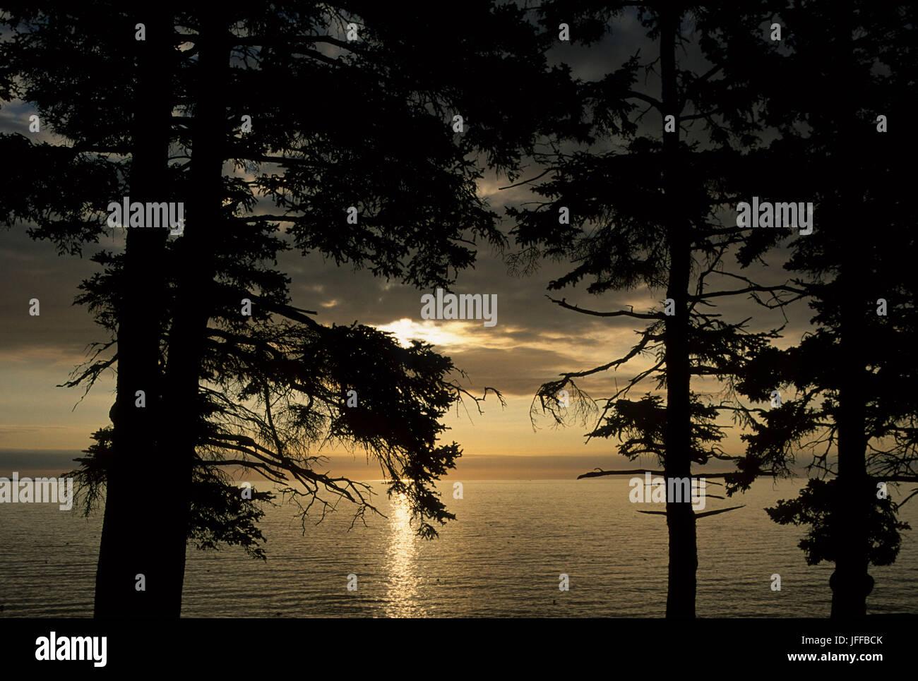 Forest shoreline silhouette, Acadia National Park, Maine Stock Photo