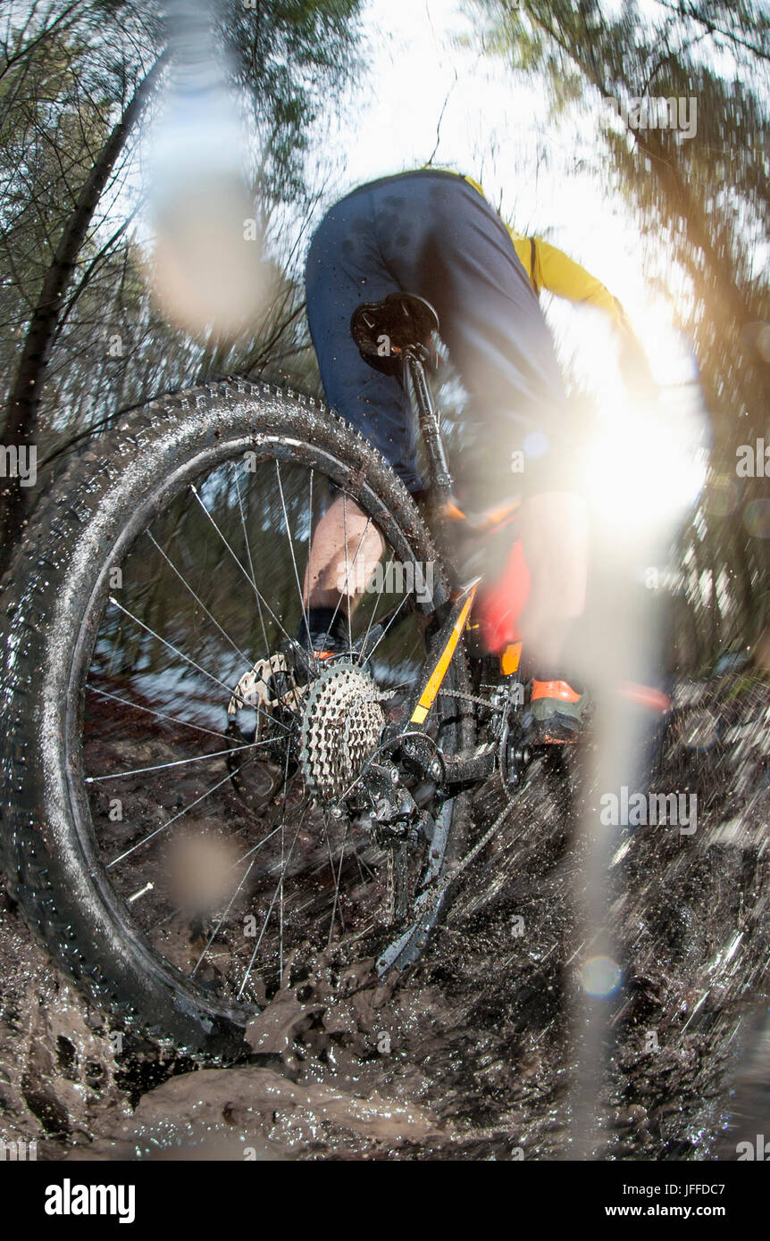 Close-up of biker riding bike through puddle in forest Stock Photo
