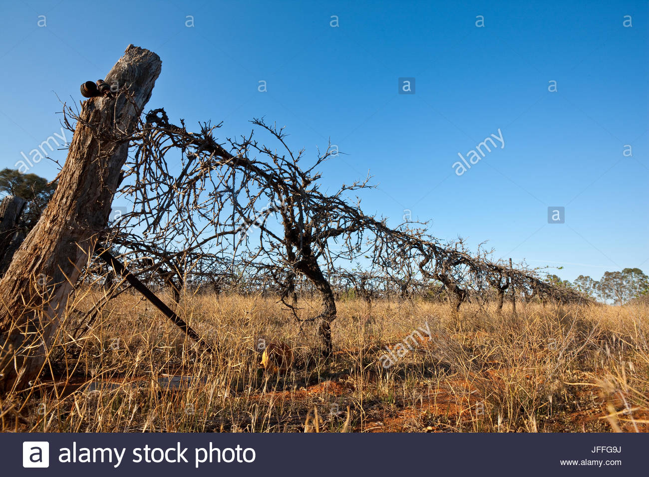 Low comodity prices and continueing drought, forced many farmers from their land in Murray Darling Basin region - Stock Image