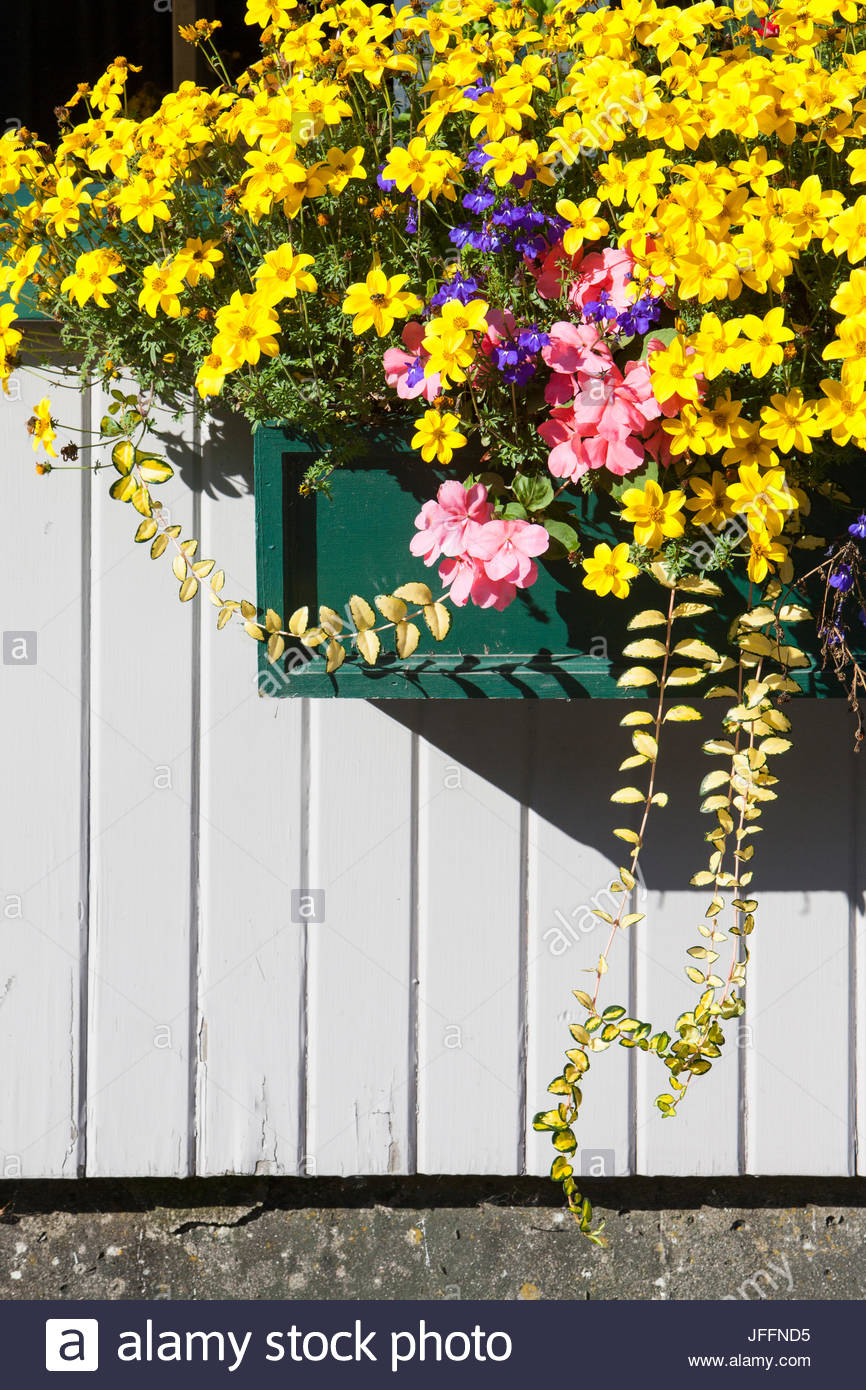 A window box filled with cascades of flowers. - Stock Image