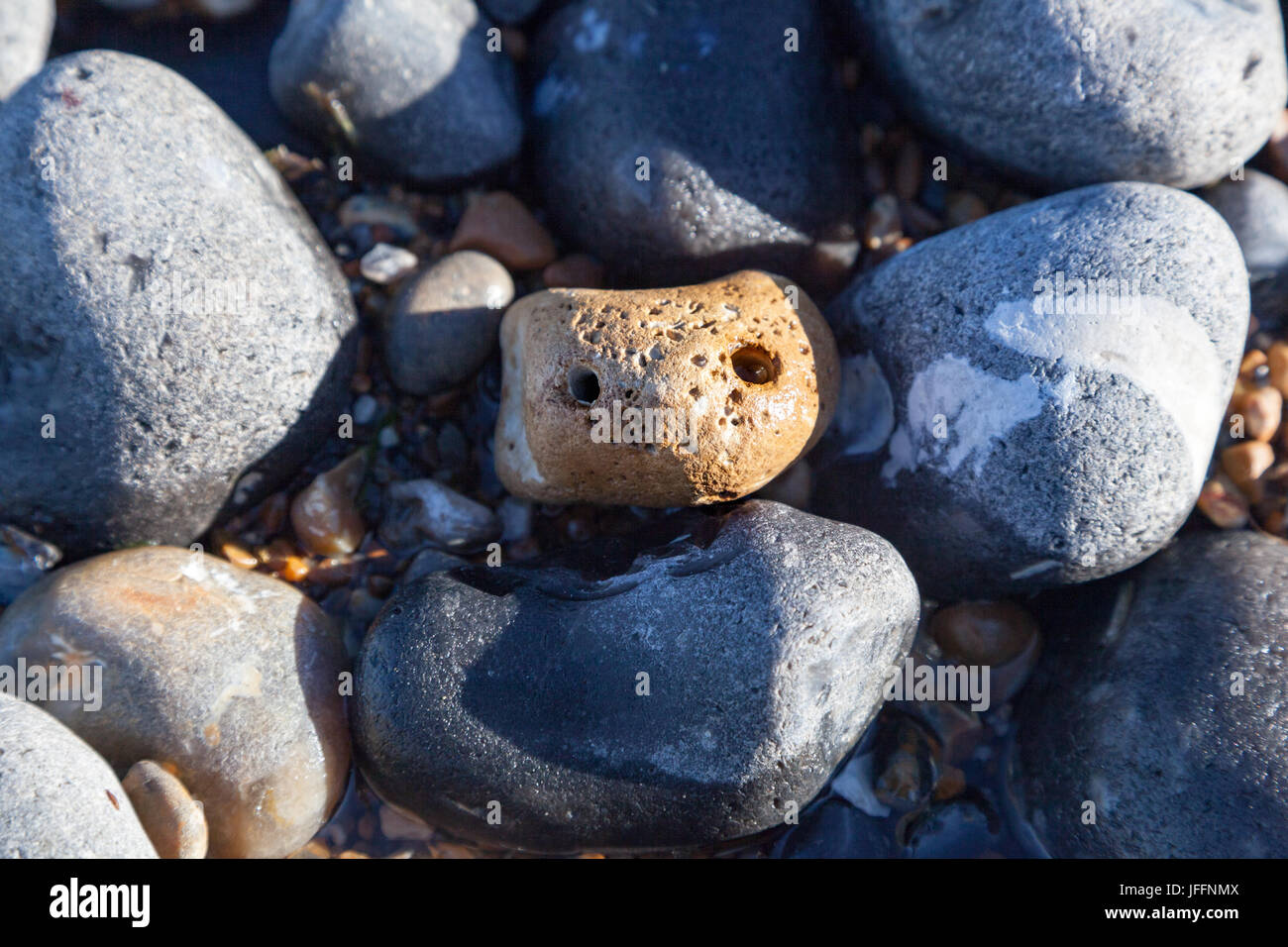 A cute 'pet rock' that looks up to you - Stock Image