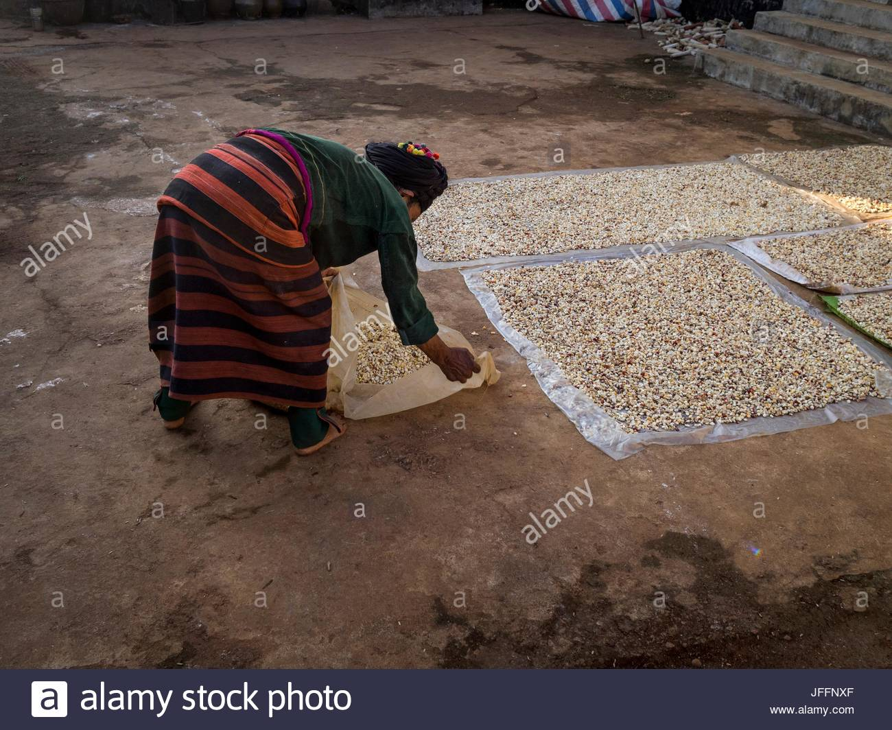 A Deang woman spreads corn kernels to dry at a farm in Yunnan Province. - Stock Image