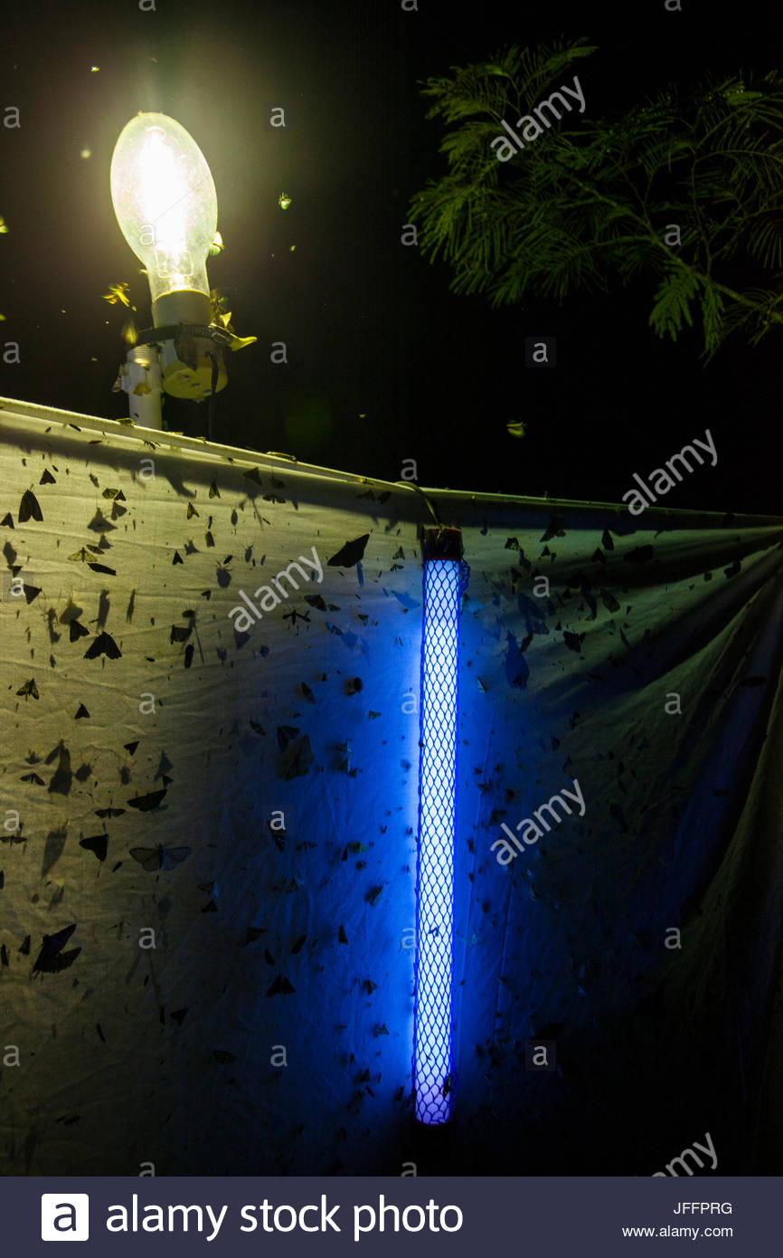 Mercury Vapor Stock Photos Images Alamy Photo Cell Wiring Diagram Scientists Use A Black Light And To Attract Insects Sheet In