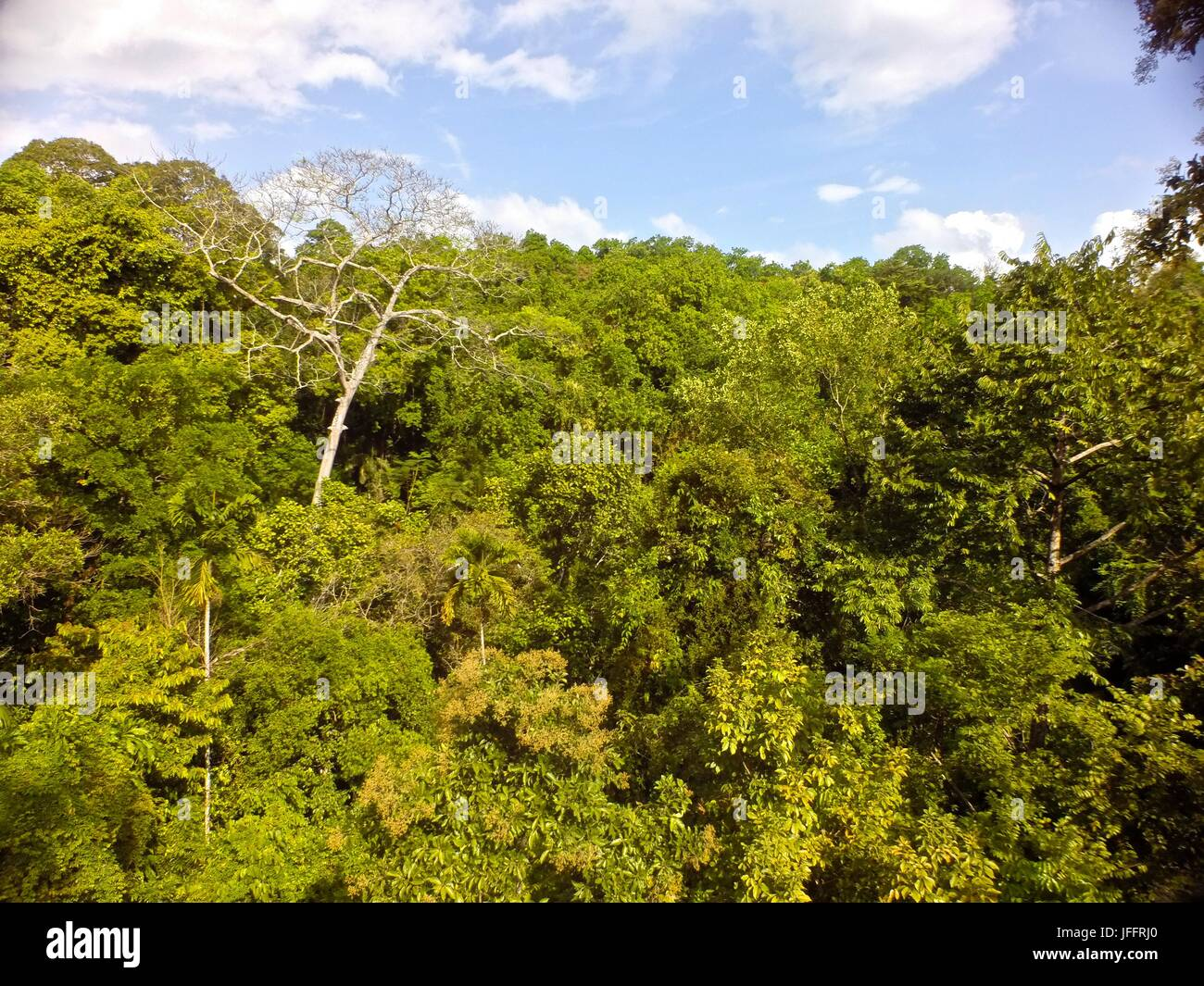 Rainforest on Barro Colorado Island. - Stock Image