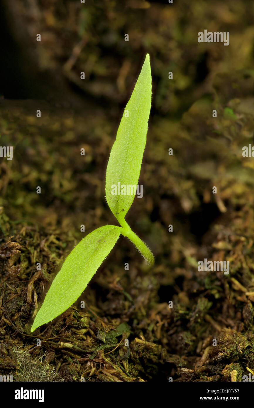 Small green sprout to sun - Stock Image