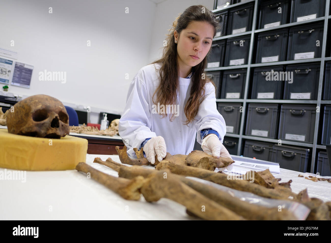 Forensic Anthropologist Working On An Ancient Skeleton Stock Photo Alamy