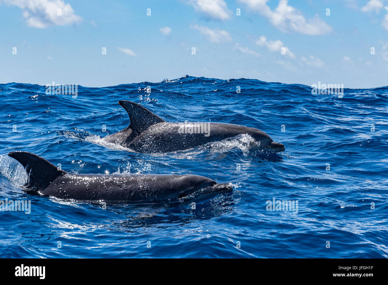 two dolphins - Stock Image