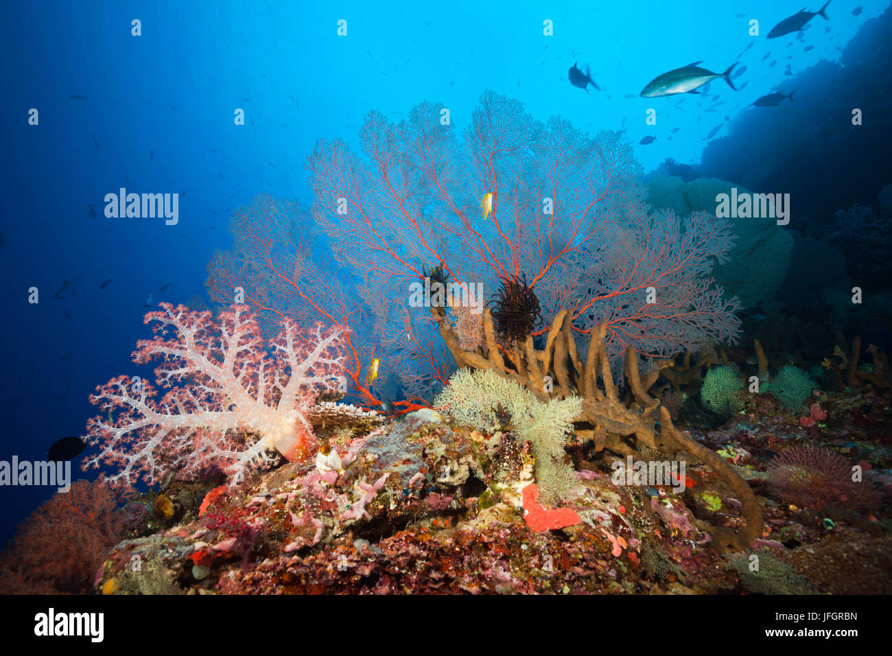 Very varied coral reef, Russell islands, the Solomon Islands - Stock Image