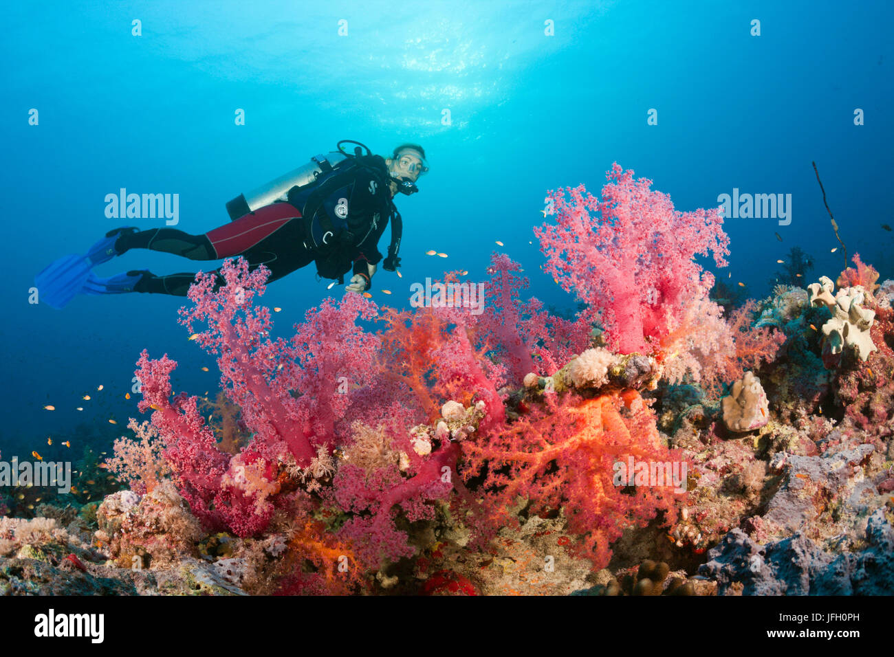 Diver over coral reef, the Red Sea, Ras Mohammed, Egypt - Stock Image
