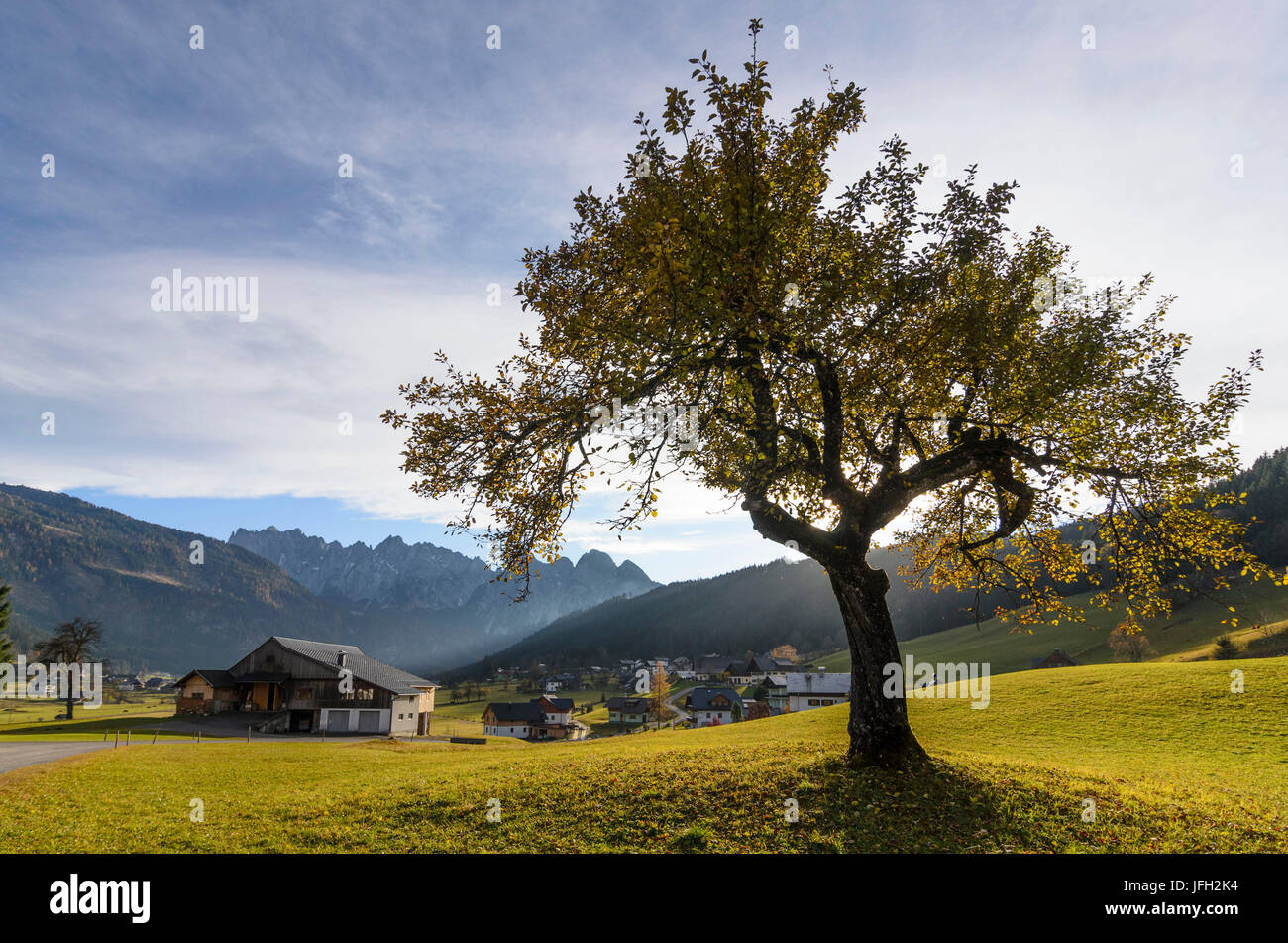 Farmhouses and Gosaukamm, Austria, Upper Austria, Salzkammergut, Gosau - Stock Image