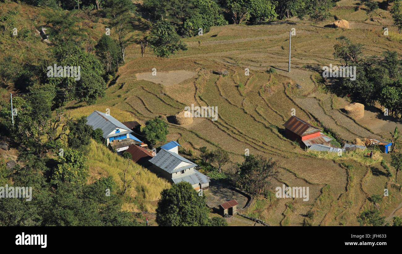 Rice fields and farmhouses in Nepal - Stock Image