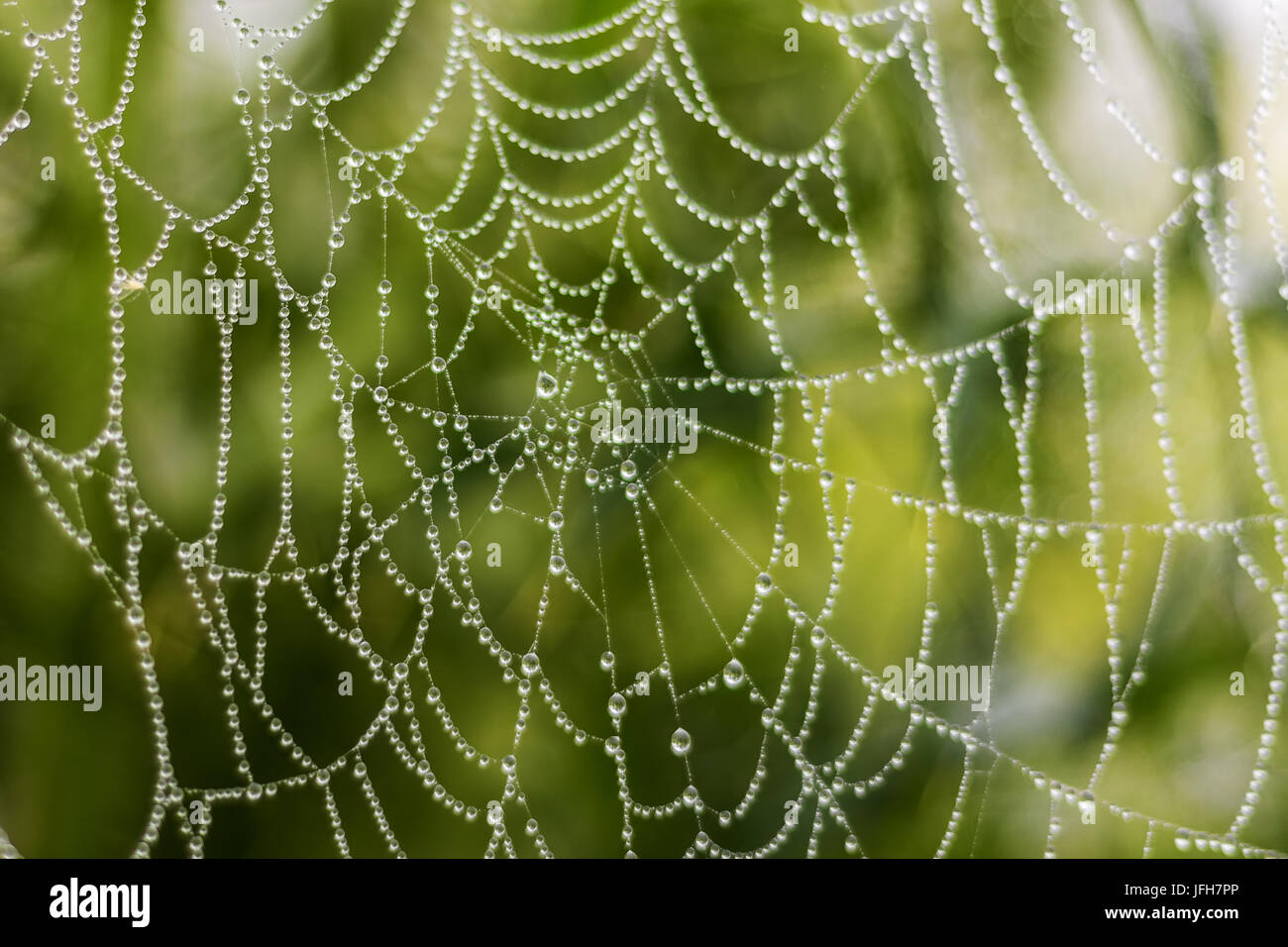 Spiderweb with dewdrops - Stock Image