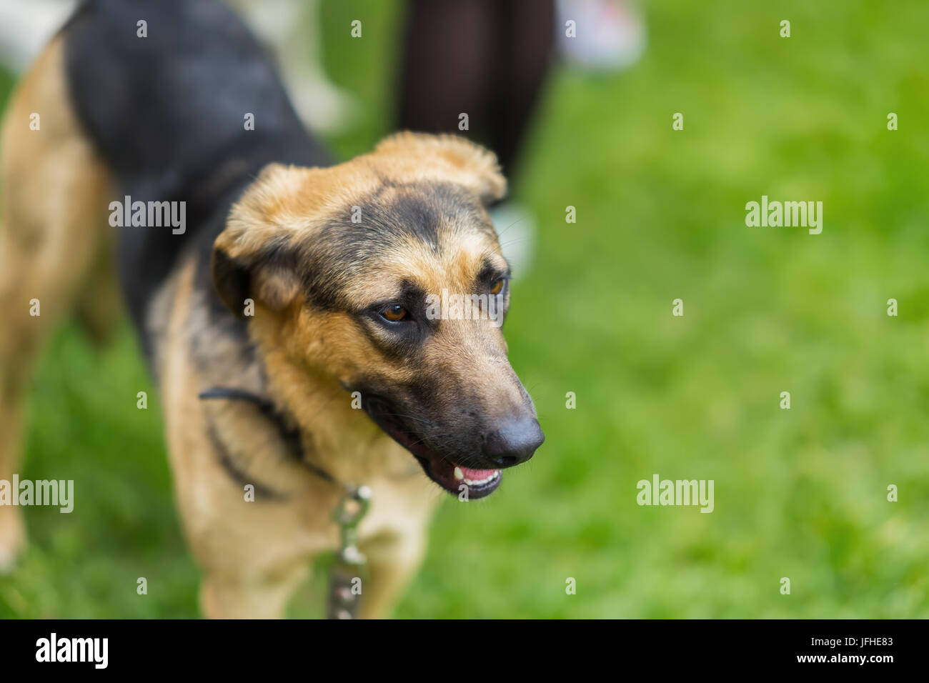 Dog in a shelter with sad eyes of hope, waiting to be adopted. Concept of social problem of homeless animals. With - Stock Image