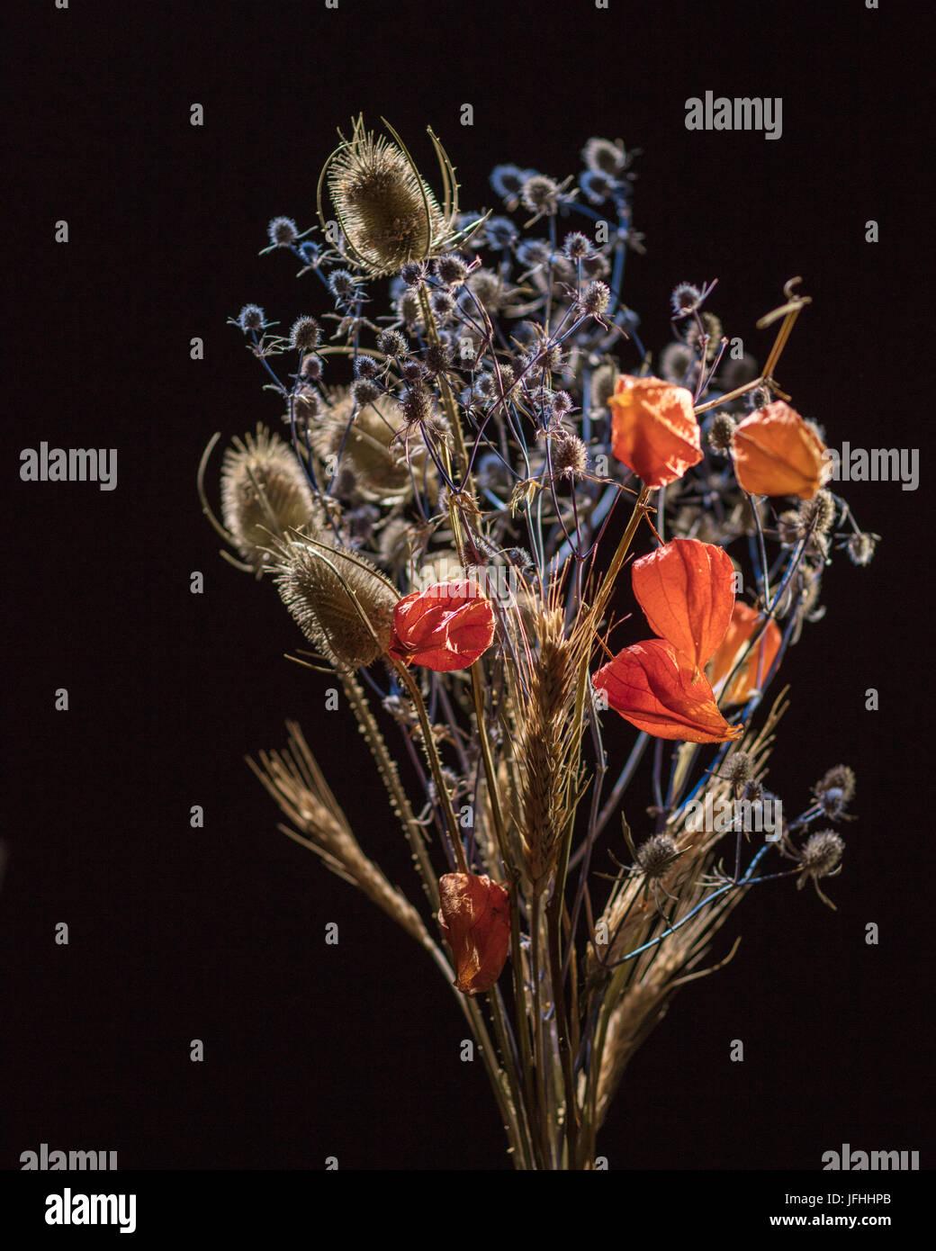 Dry flowers on black - Stock Image