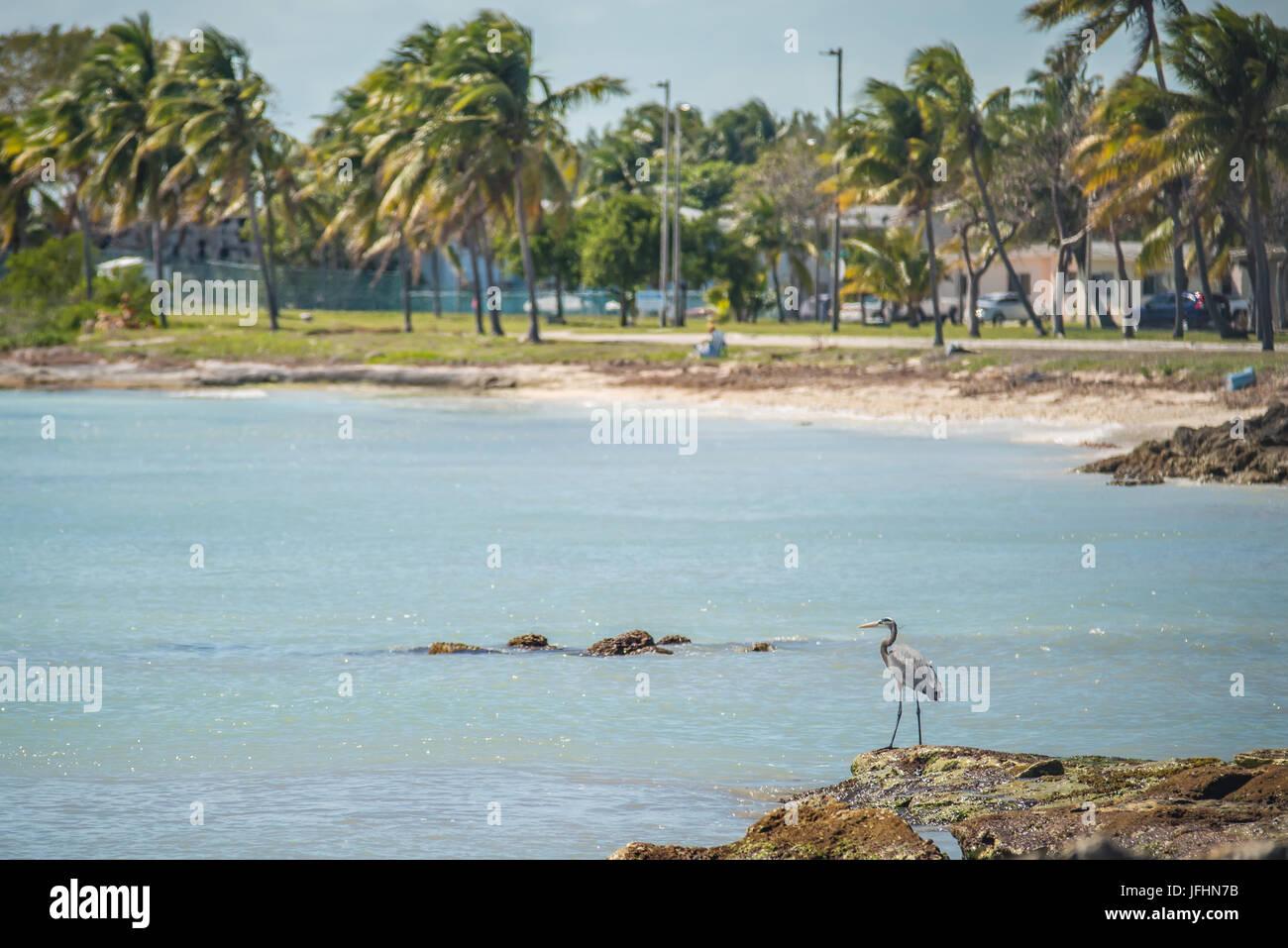 beautiful beach and ocean scenes in florida keys - Stock Image