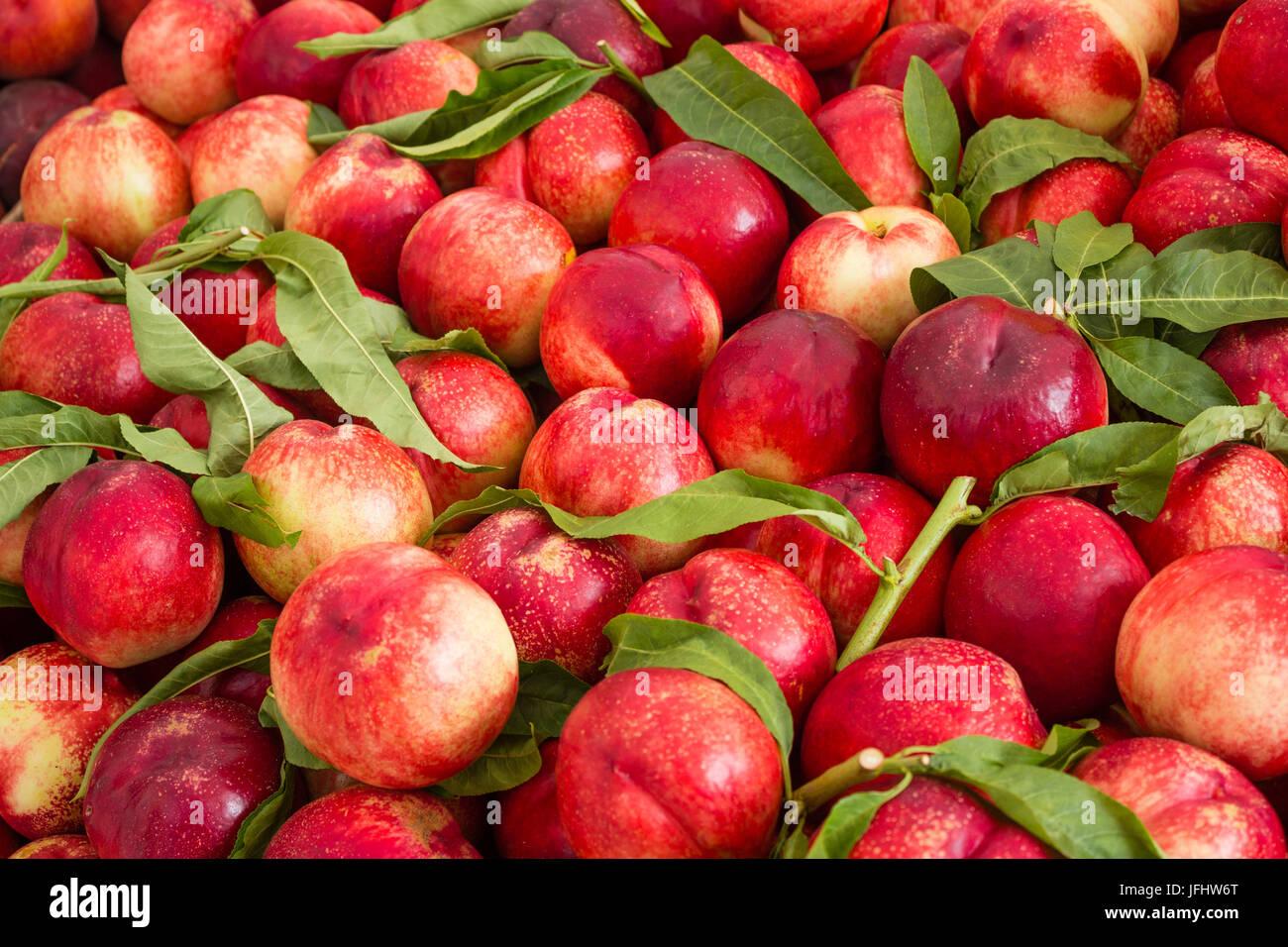 fruit background, nectarines / peaches fruity - Stock Image