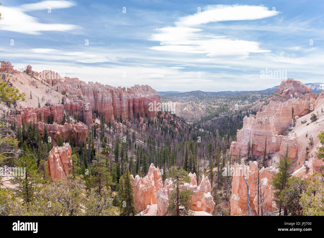View at rock pyramids in Bryce Canyon Nationalpark, Utah, the USA - Stock Image