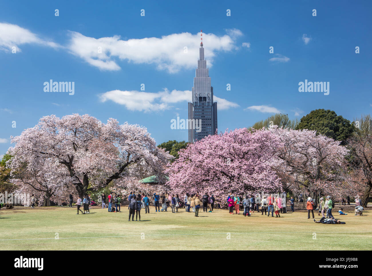 Japan, Tokyo City, Shinjuku District, Shinjuku Gyoen-Park, Cherry Blossoms, - Stock Image