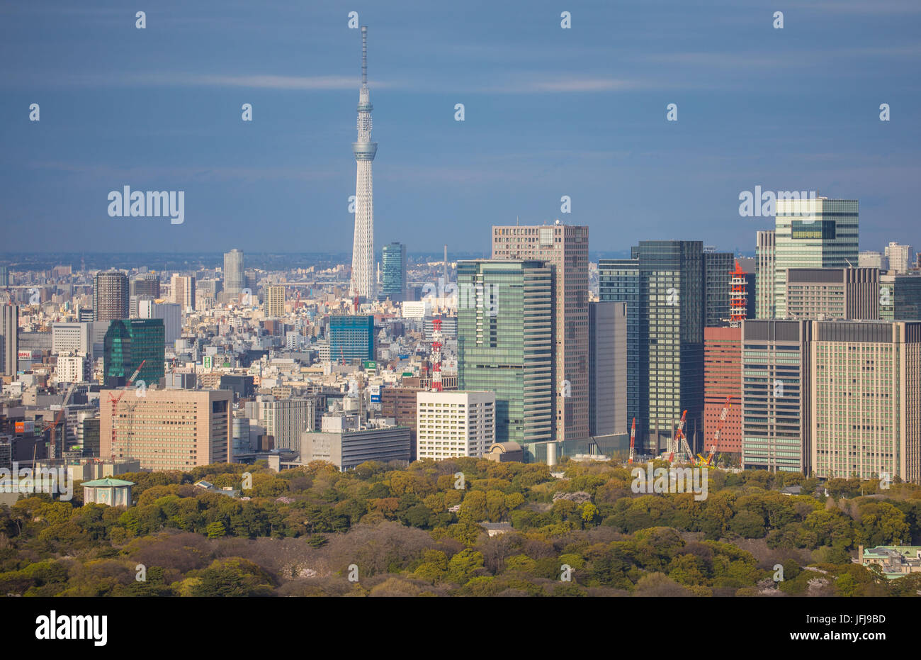 Japan, Tokyo City, Imperial Palace East Gardens, Otemachi Skyline, and Skytree Tower Stock Photo