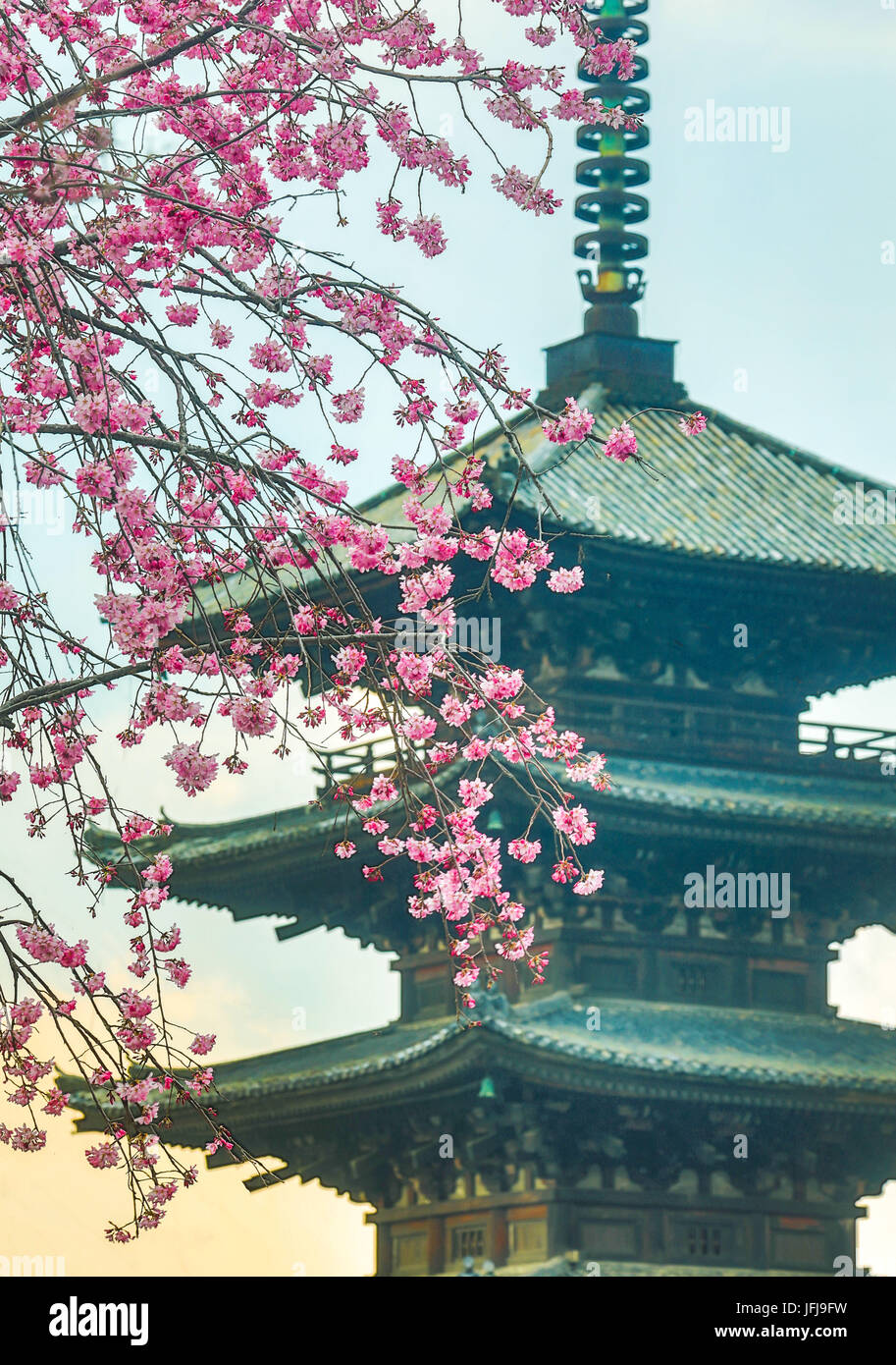 Japan, Kyoto City, Pagoda and blossoms - Stock Image