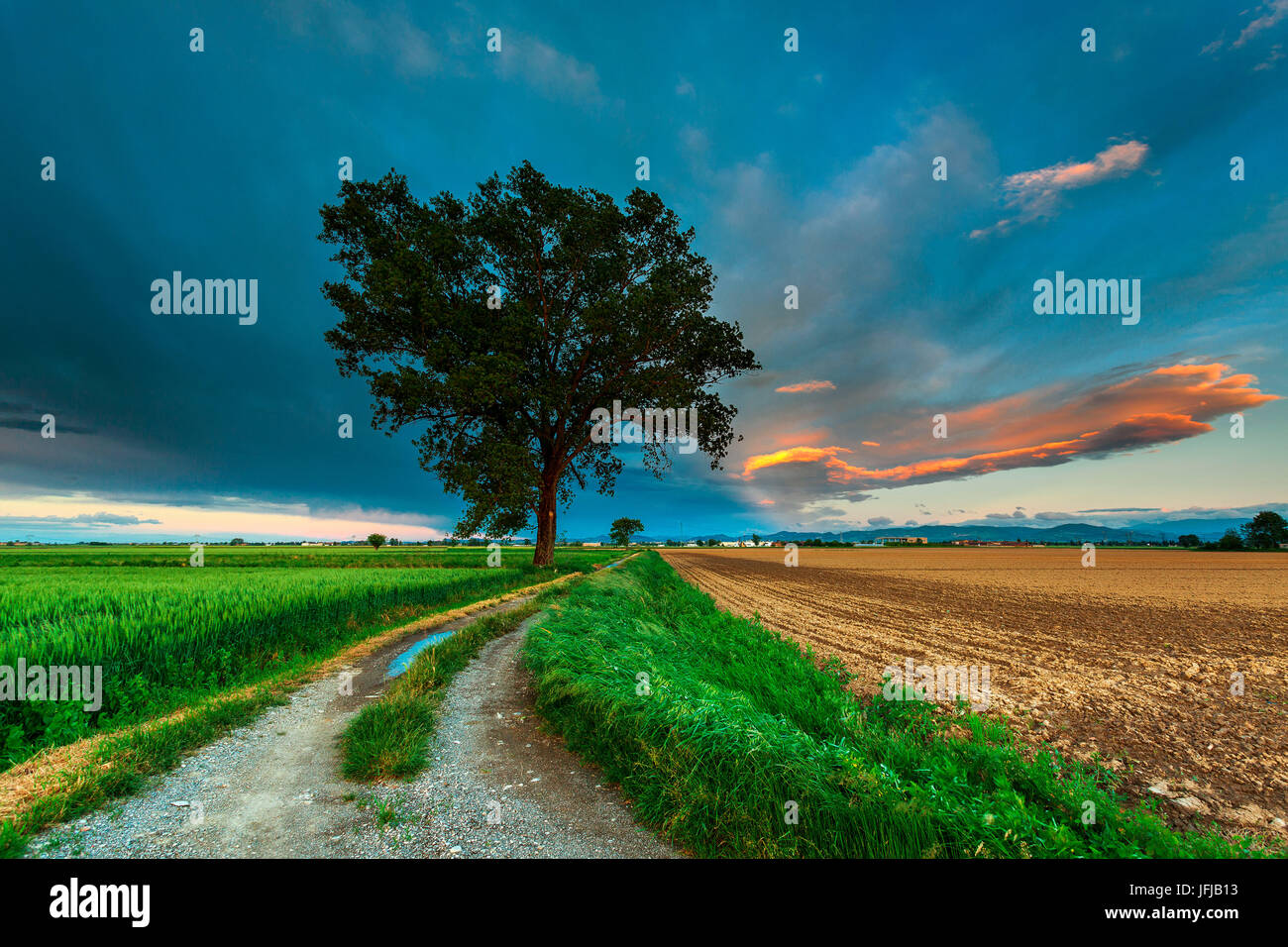 Po Valley, Lombardy, Italy, Countryside's path, between fields, with a tree and coloured clouds, - Stock Image