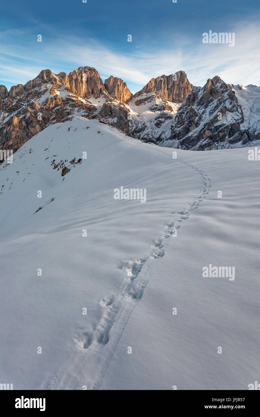 Ungulates tracks in front of the Marmolada, the mountain known as the 'Queen of the Dolomites', Passo di - Stock Image
