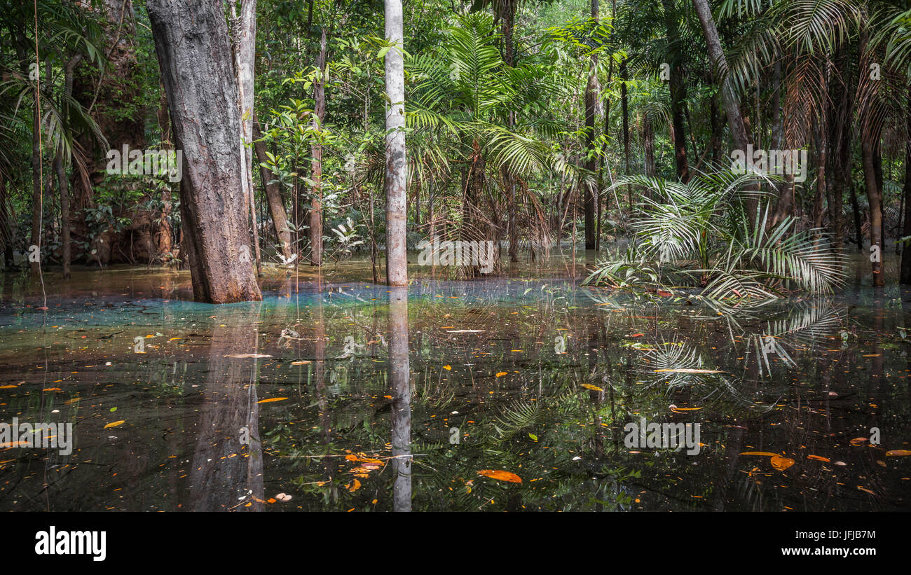 The flooded forest of the Rio negro Basin depicted in early August when the water level is still high and floods - Stock Image