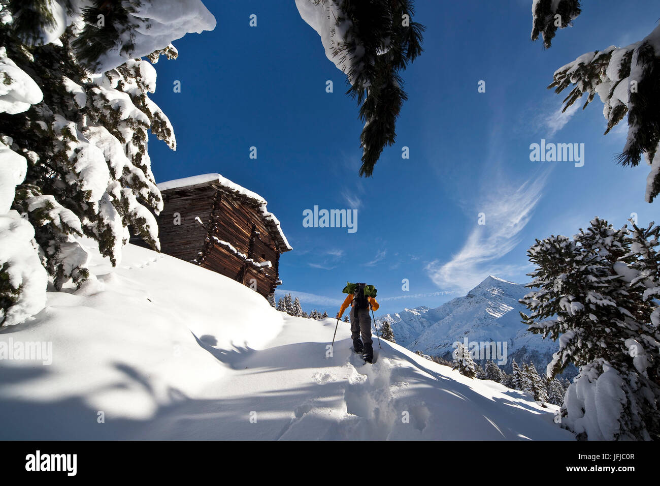 Hiker blessed with snowshoes advancing in fresh snow in Baite Ables, Valfurva, Valtellina, Lombardy, Italy, - Stock Image