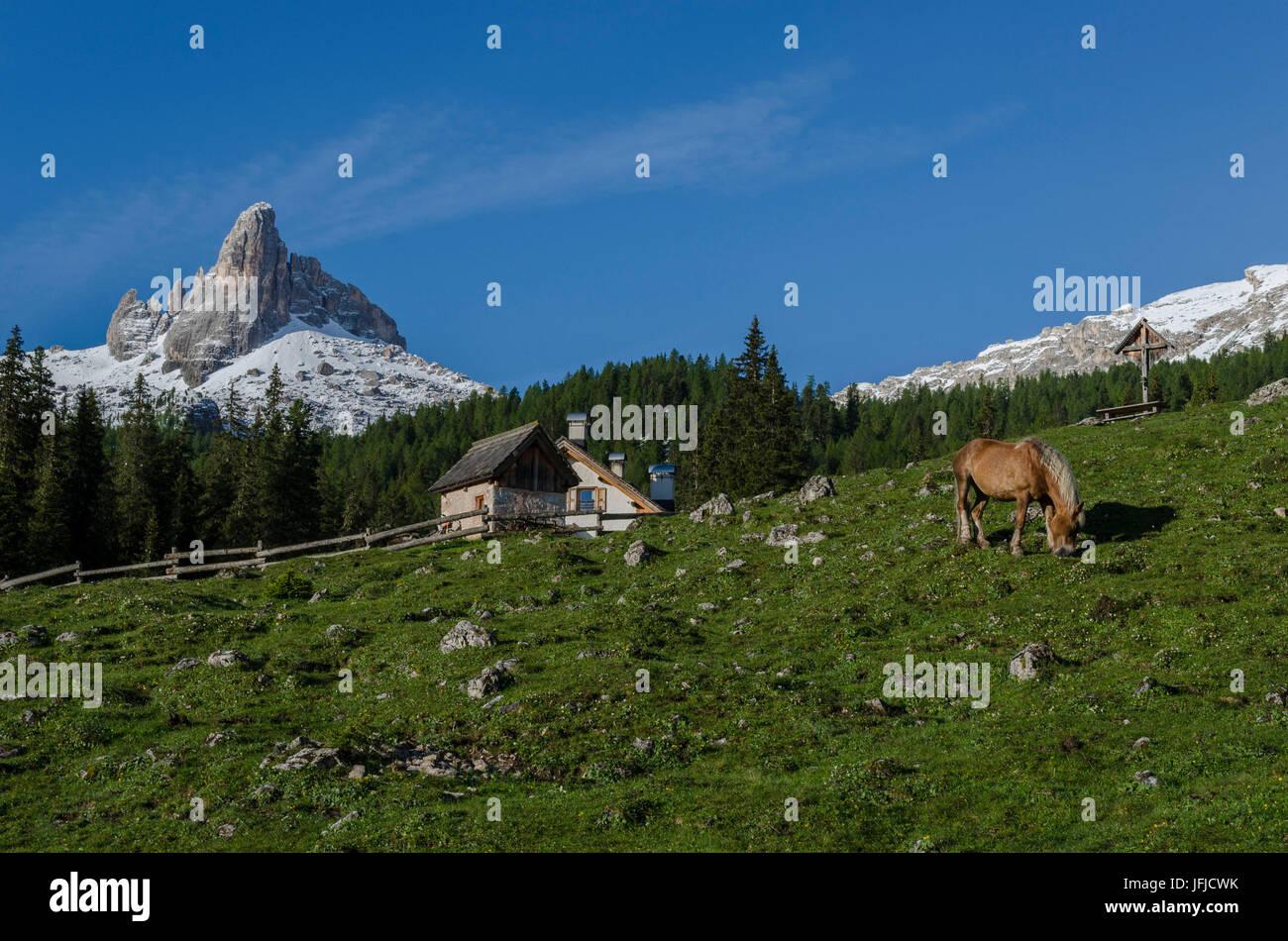 Federa, Becco di mezzodi, Cortina d'Ampezzo, Dolomiti, Dolomites, Veneto, Italy, Horse at Federa - Stock Image