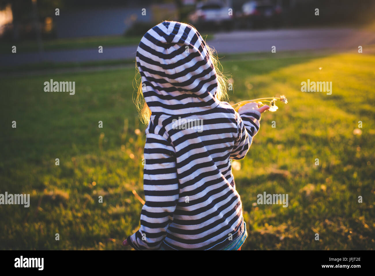 A toddler holds a dandelion in the sunlight with the toddler standing with back to camera. - Stock Image