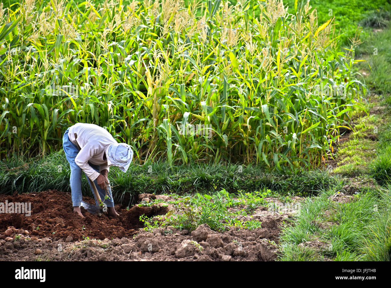Self-sufficient labor-intensive farming in Morocco. Traditional sustainable agriculture. - Stock Image