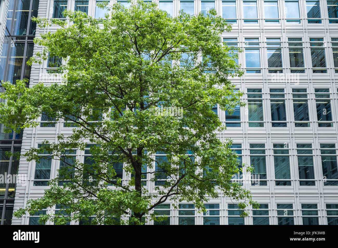 Modern office building with a verdant tree in front on a spring day - Stock Image