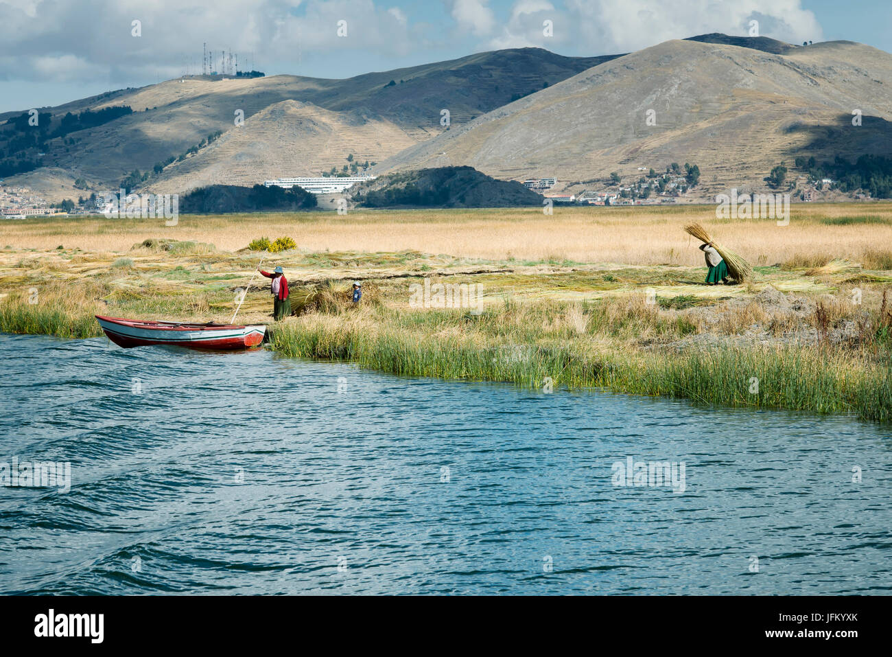 Aymara family collect reed for building Uros floating islands, Titicaca lake, Peru - Stock Image