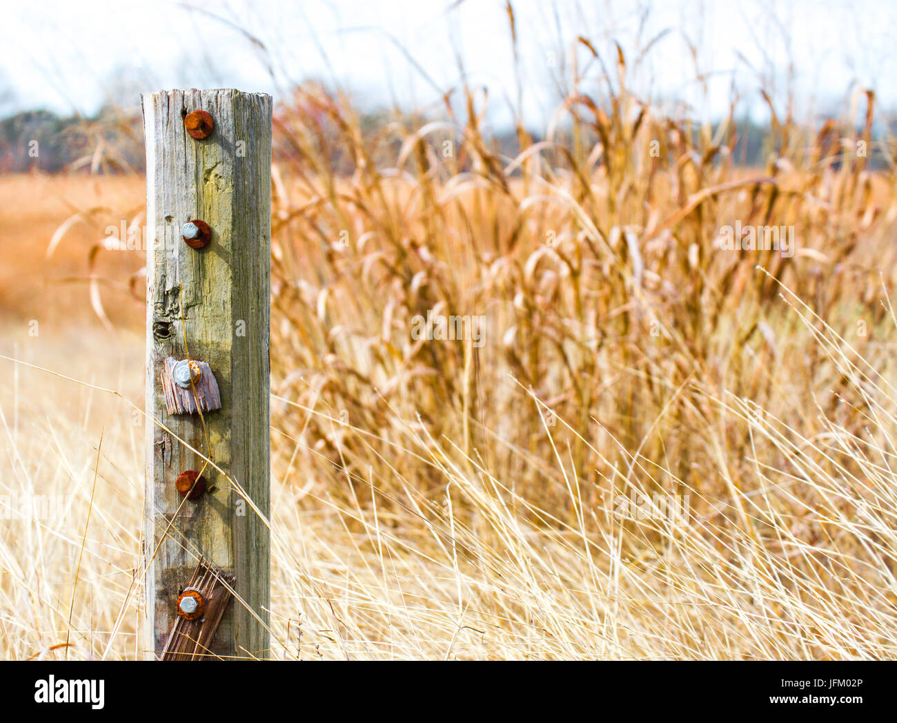 weathered fence post and prarie grass in Texas - Stock Image