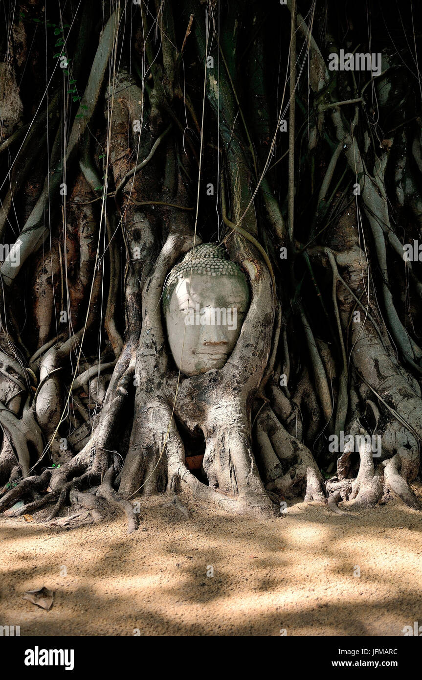A head abandoned and trapped between the secular roots of a tree in the historic site of Ayutthaya, So much beauty - Stock Image