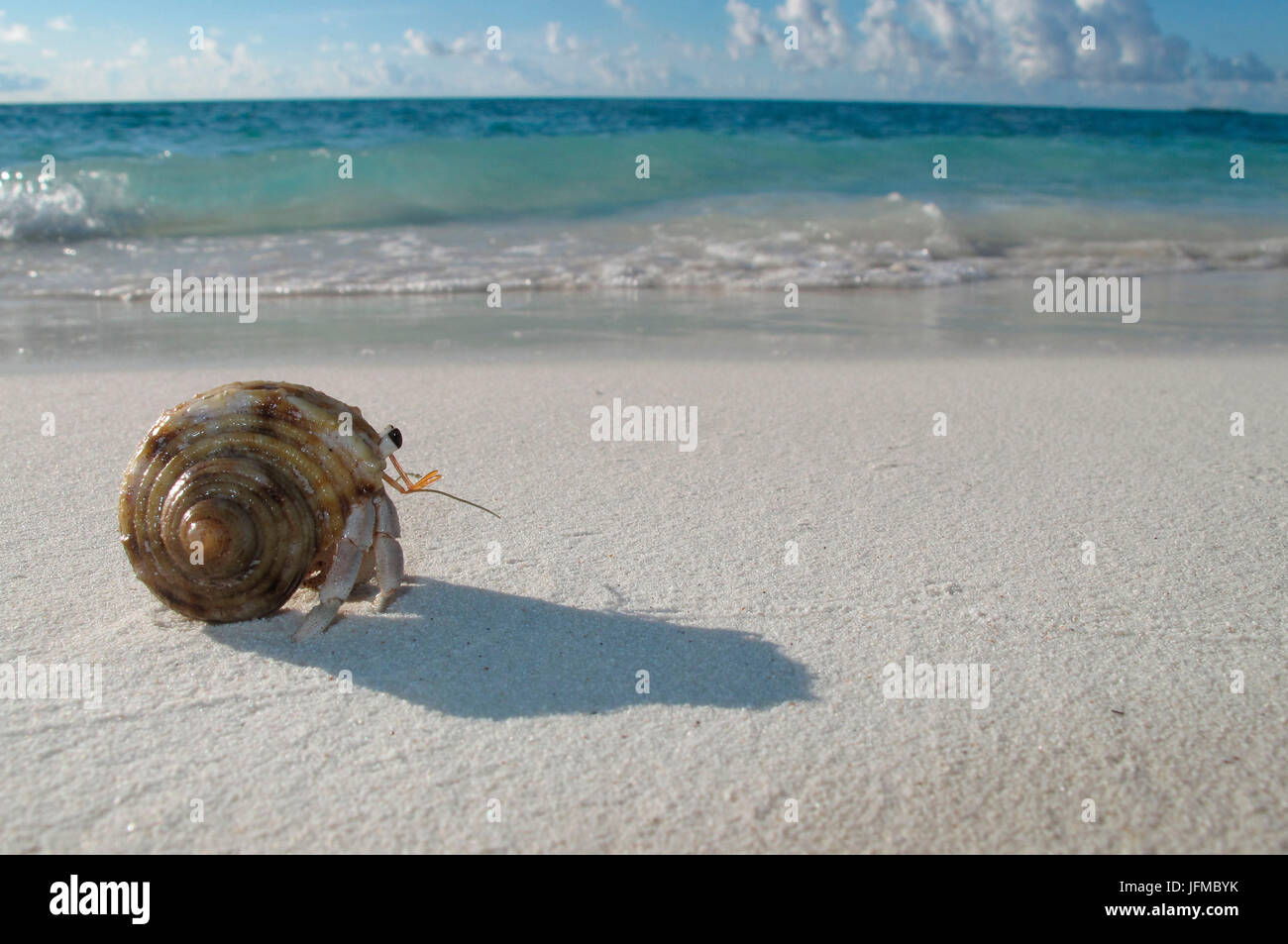 Maldive beach and sea with hermit crab - Stock Image