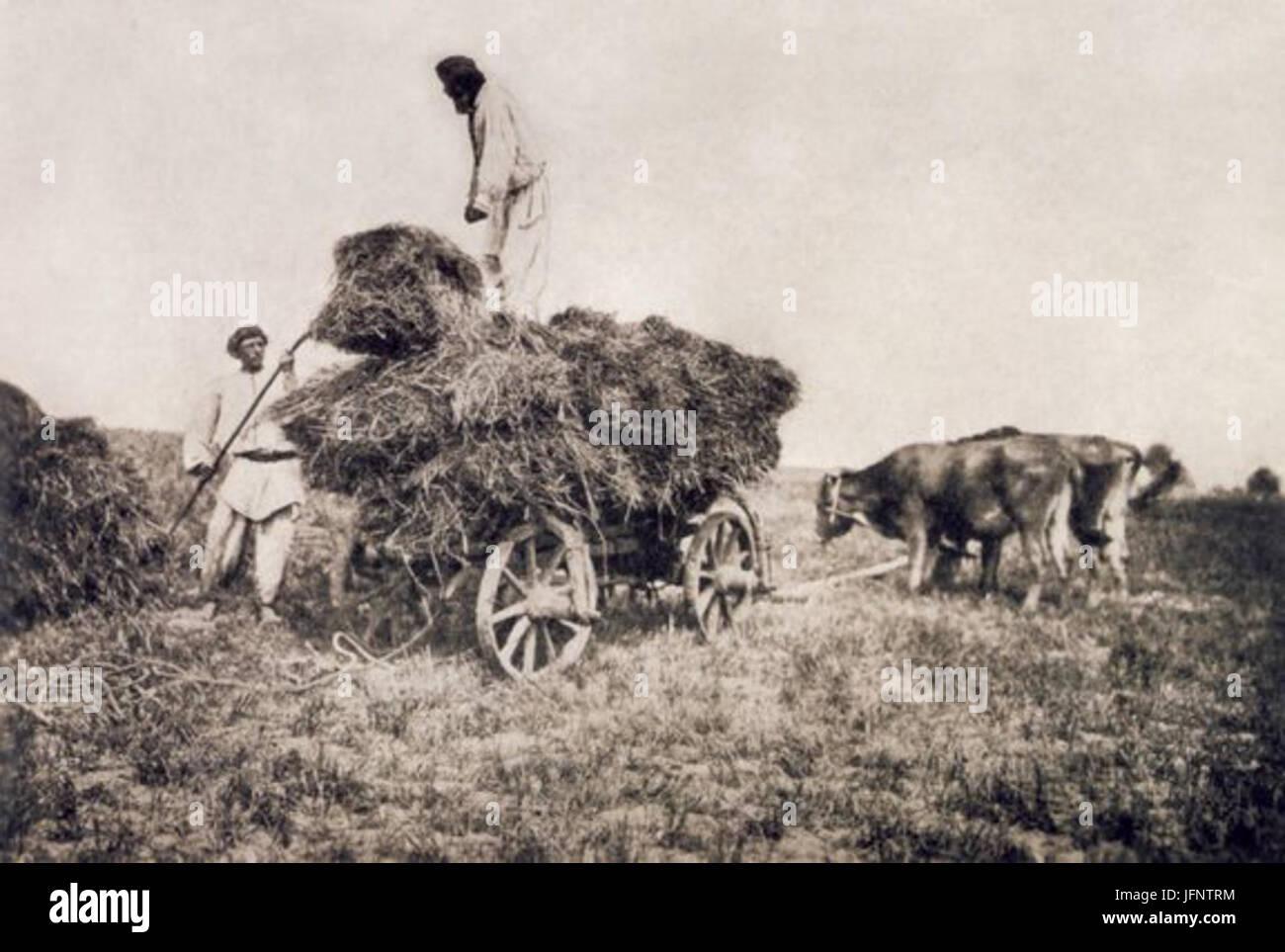 1890 s mowing-season Volyn - Stock Image