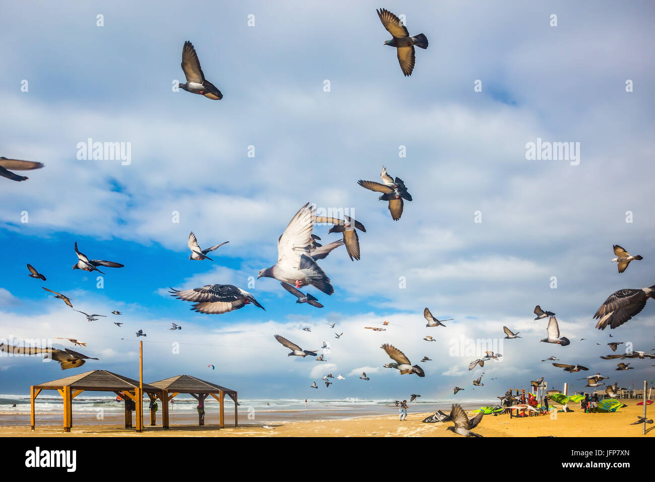Pigeons it is noisy departs from sandy beach - Stock Image