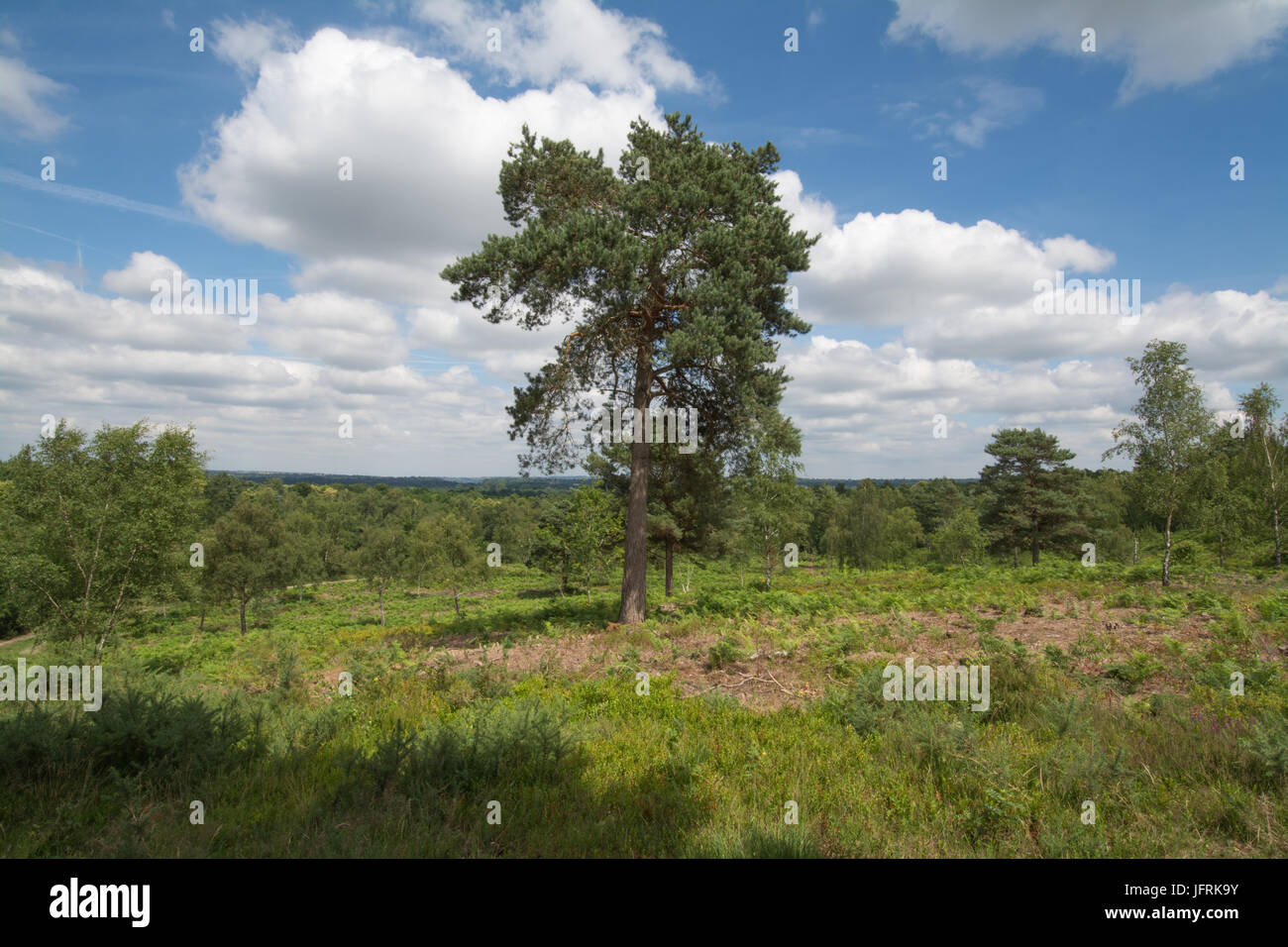 View over Mare Hill Common, Surrey, UK on a sunny summer day Stock Photo