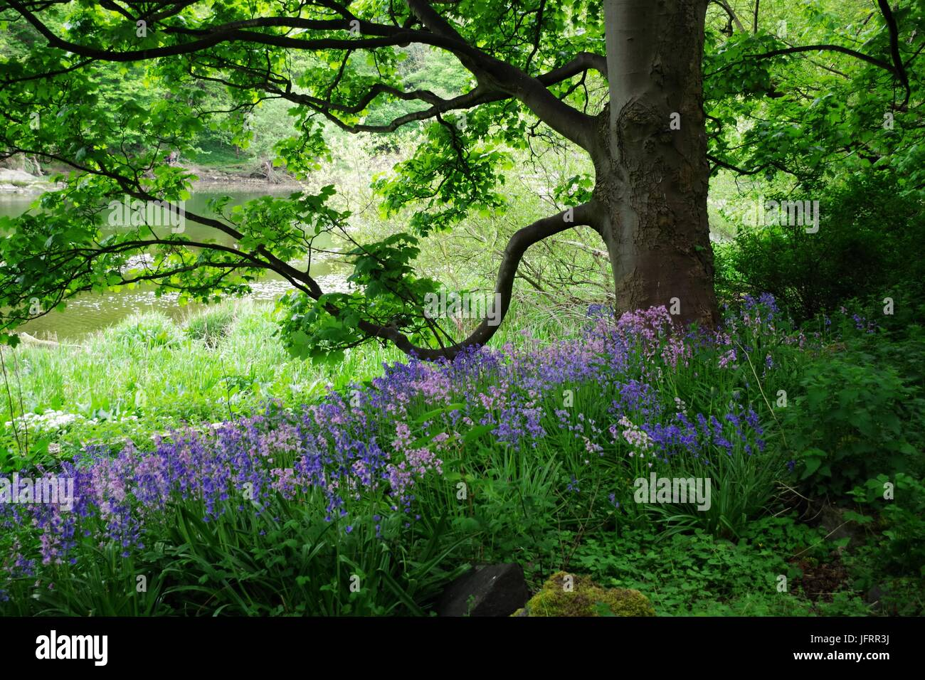 Wild Flowers River Bank Stock Photos Wild Flowers River Bank Stock
