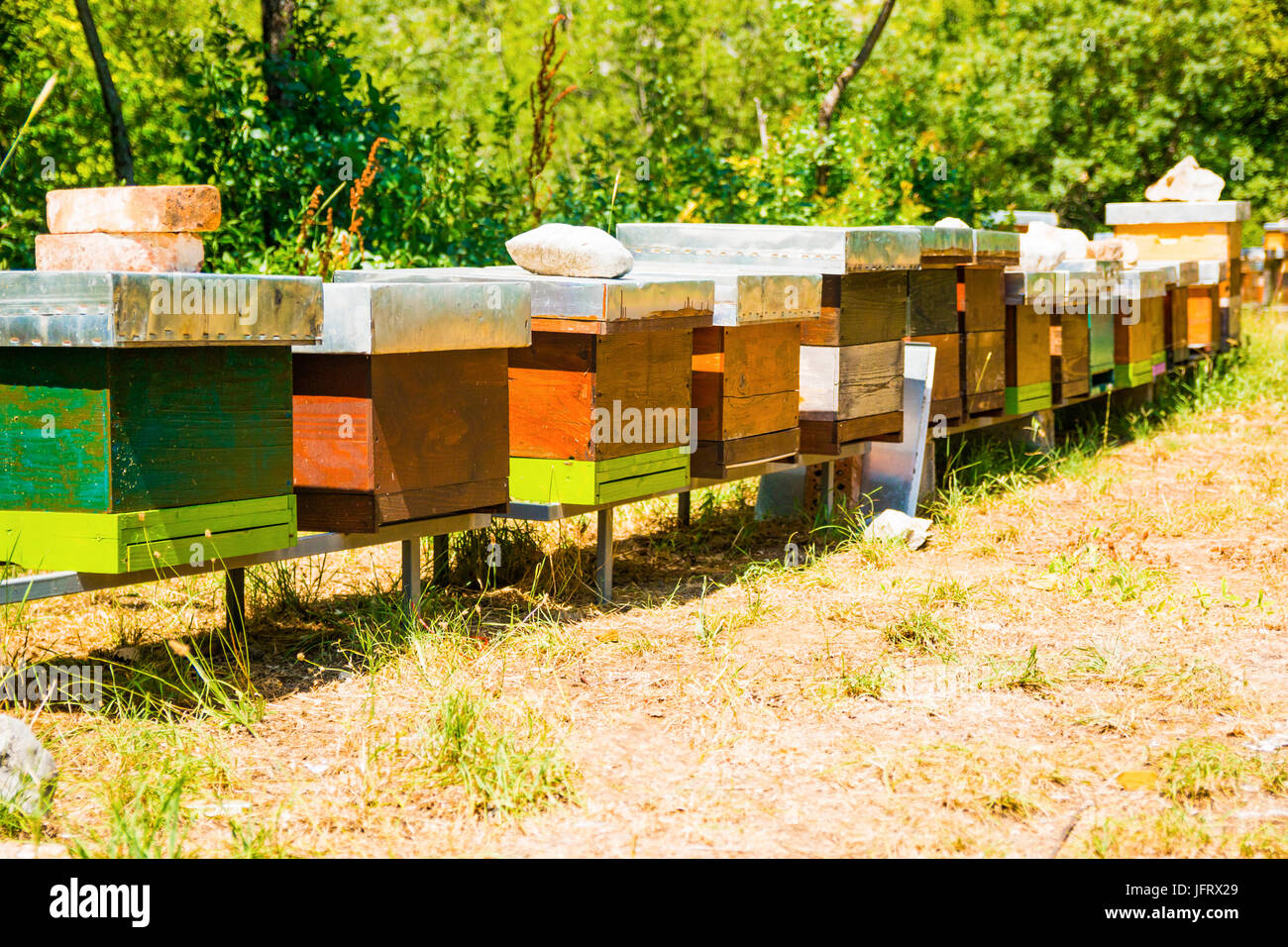 Row of apiary boxes With bees in the nature - Stock Image