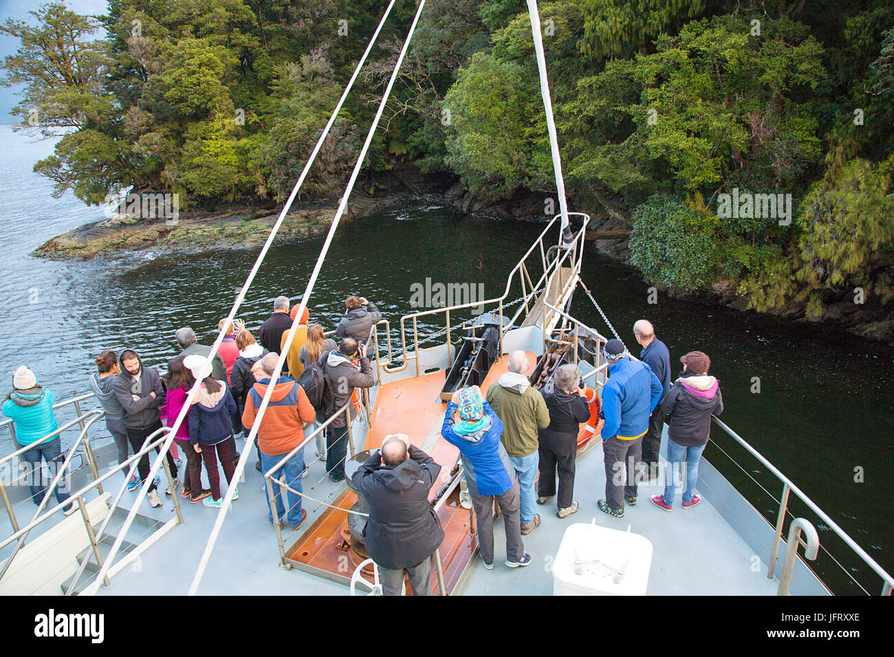 Seal Watching on a Fiordland Cruise - Milford Sound - Stock Image