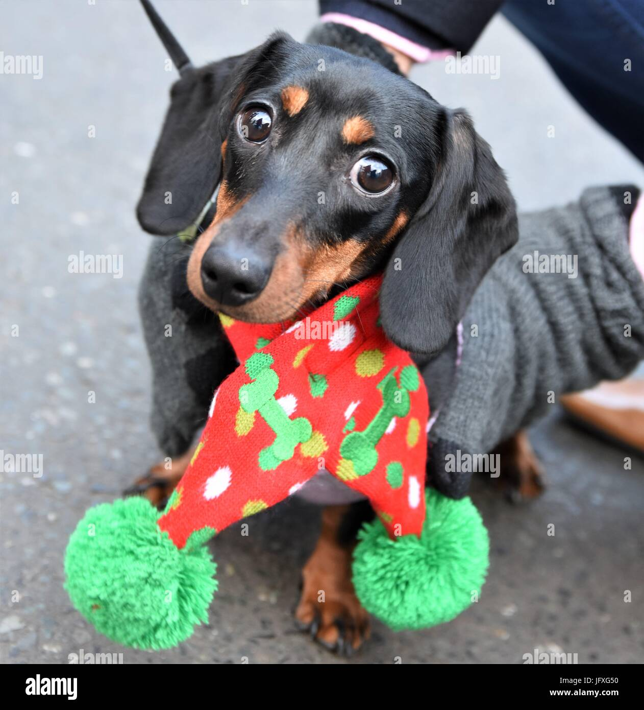Sausage Dog Christmas Decoration Stock Photos Sausage Dog