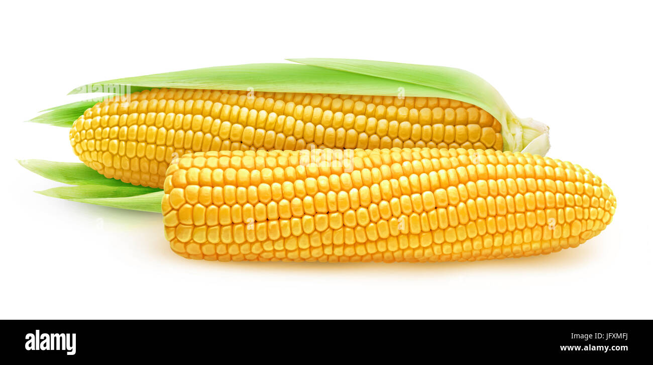 Isolated corn. Two ears of sweet corn, peeled and with leaves isolated on white background with clipping path - Stock Image